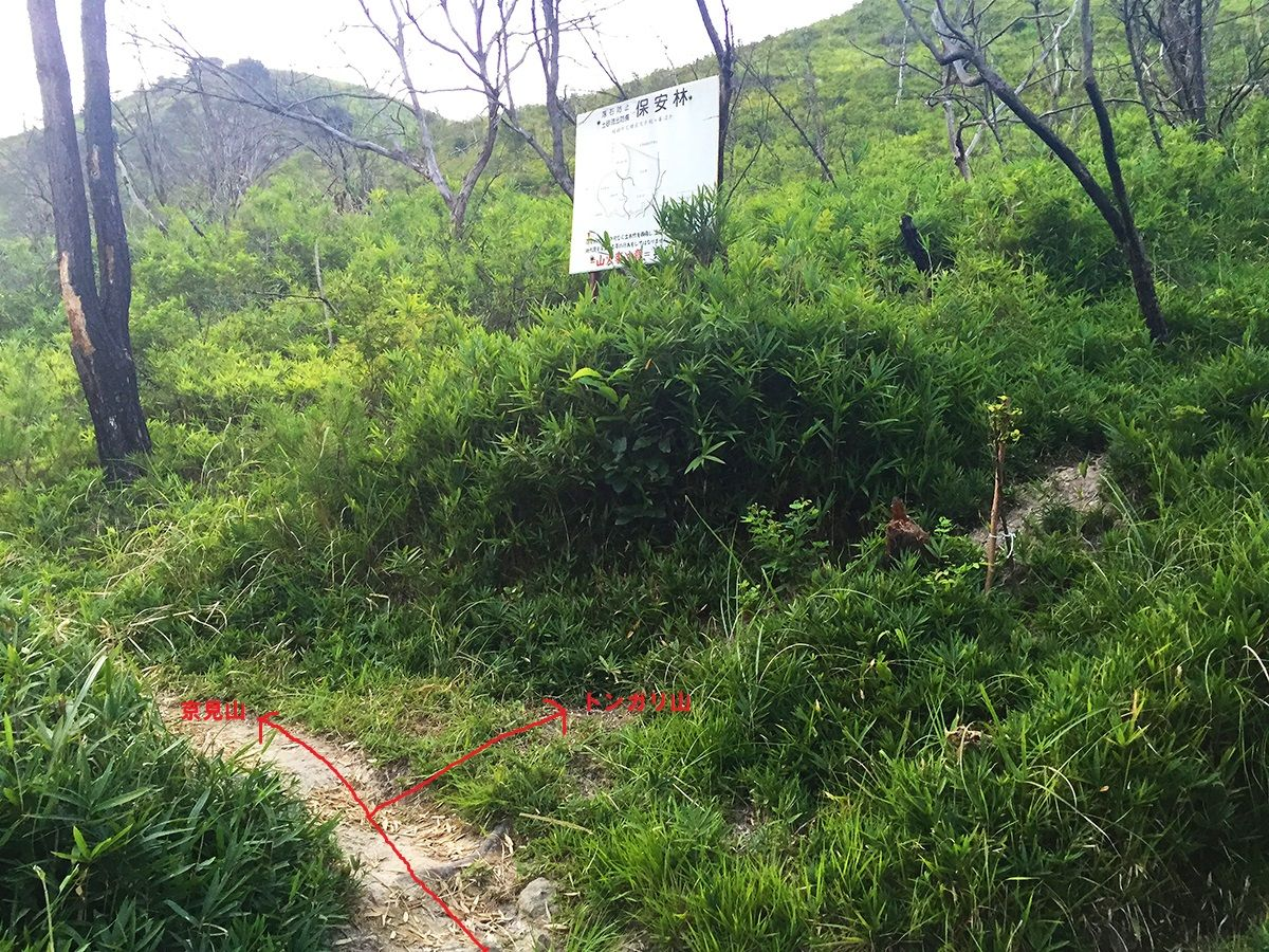 ここでも分岐。右はトンガリ山への谷ルート