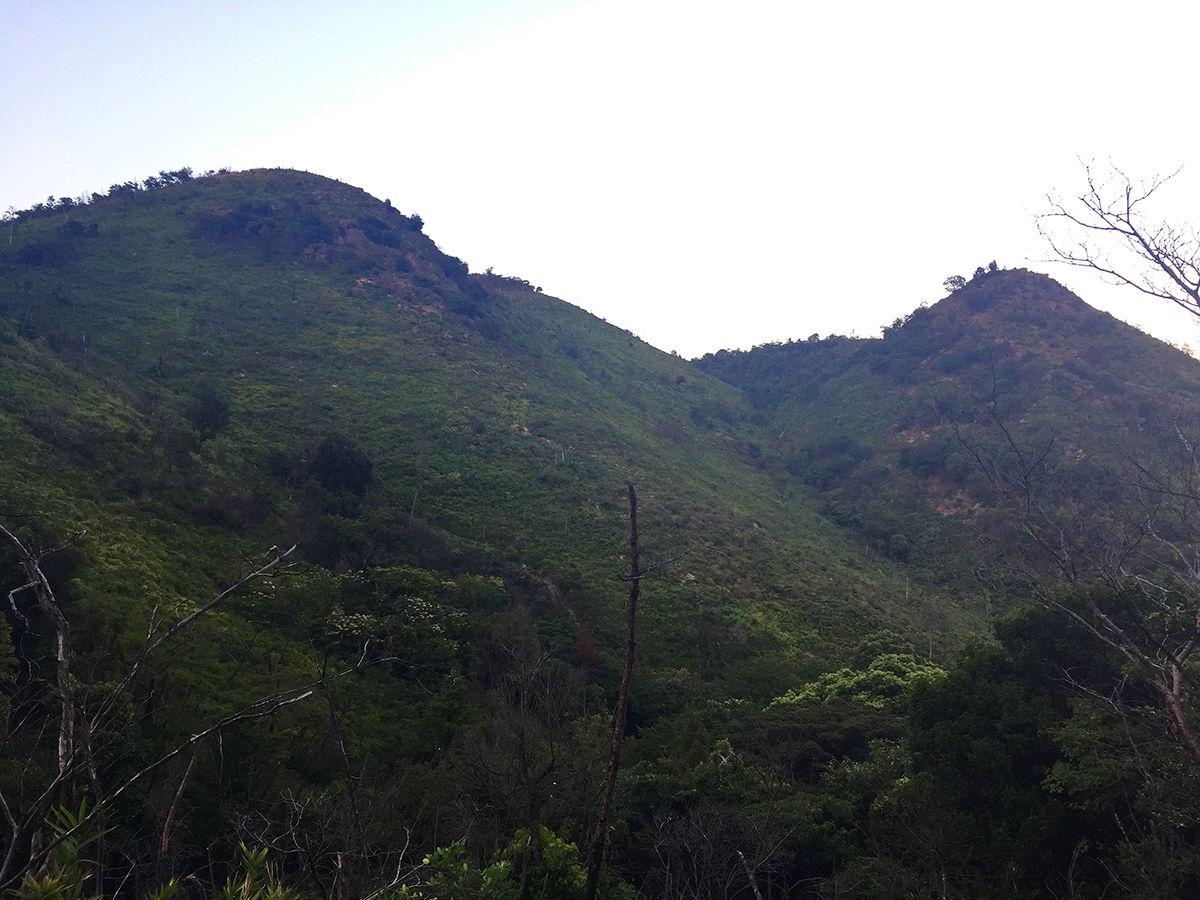 数年前に火事で焼けた山らしいが新しく生えている草と岩肌で迫力あるような山容に見えた