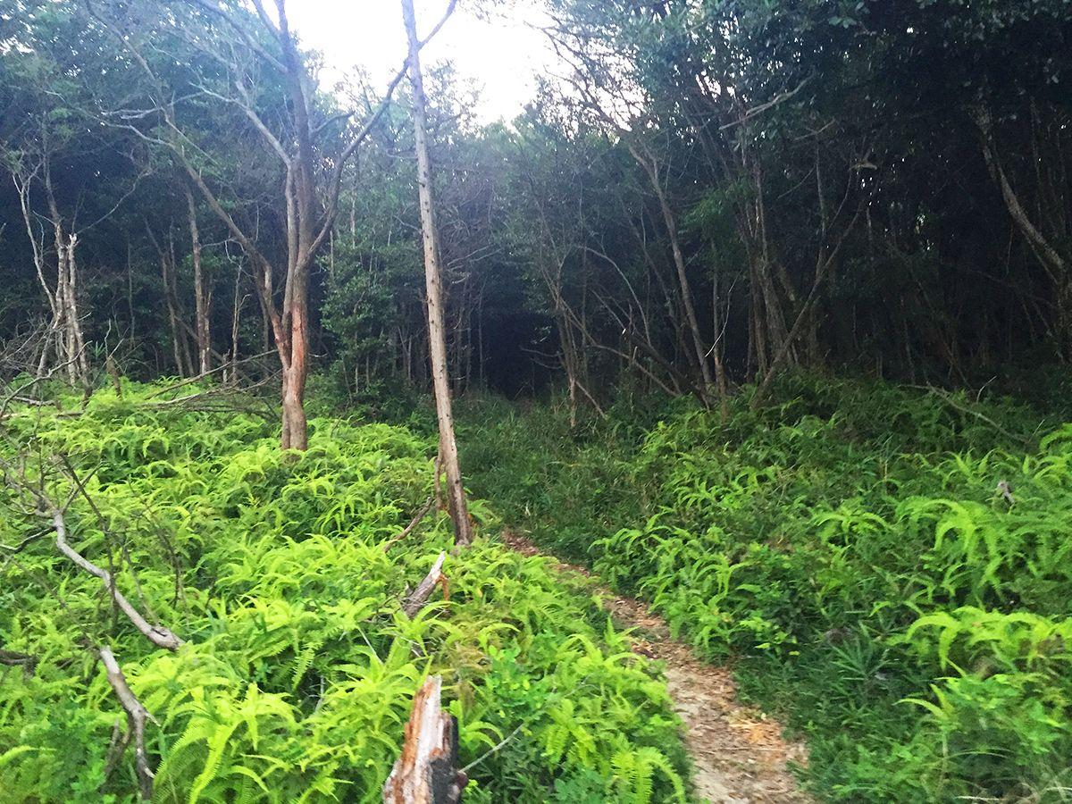 稜線は樹林帯の中。夕方になると暗い