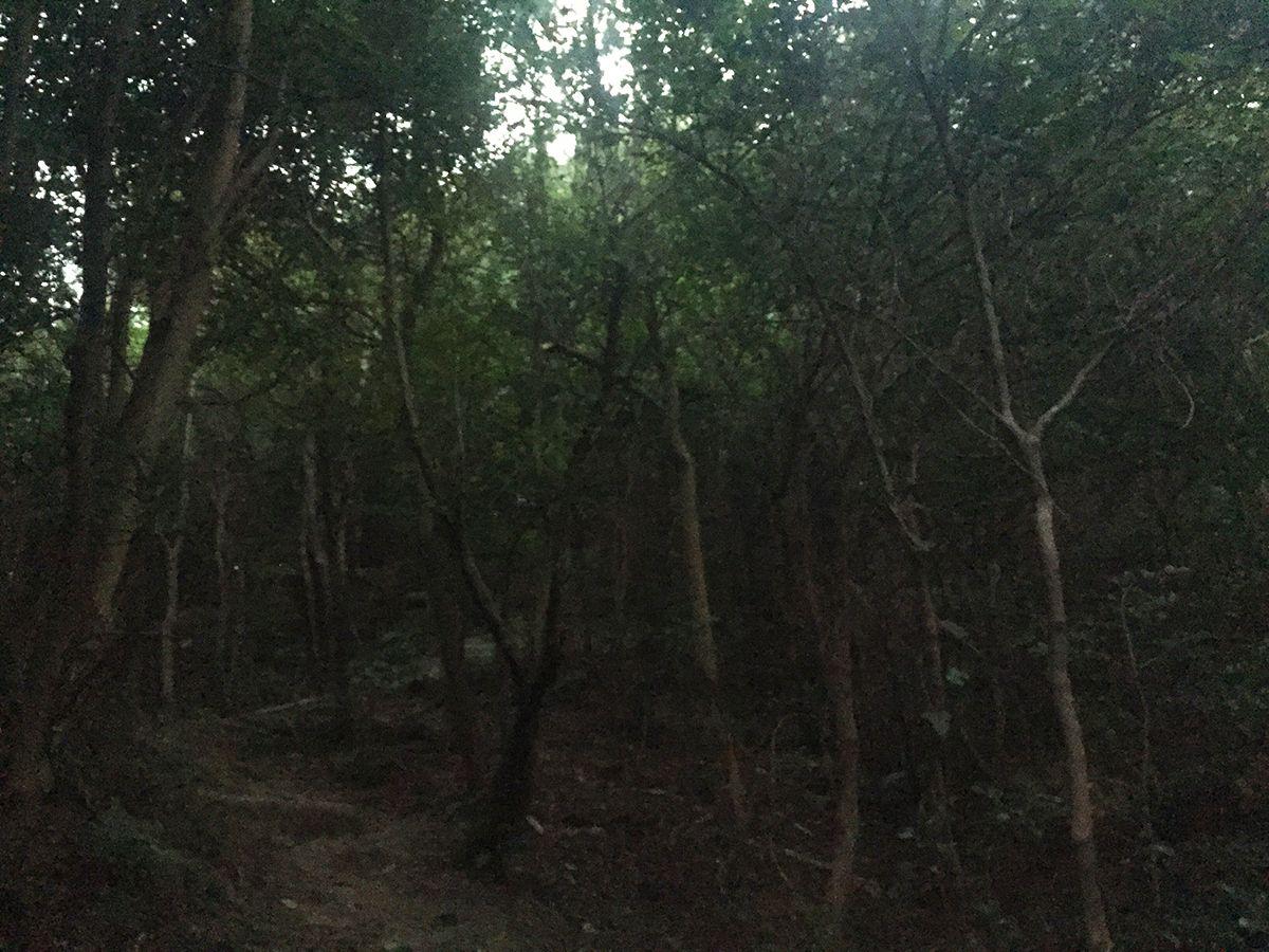 京見山直下は急登