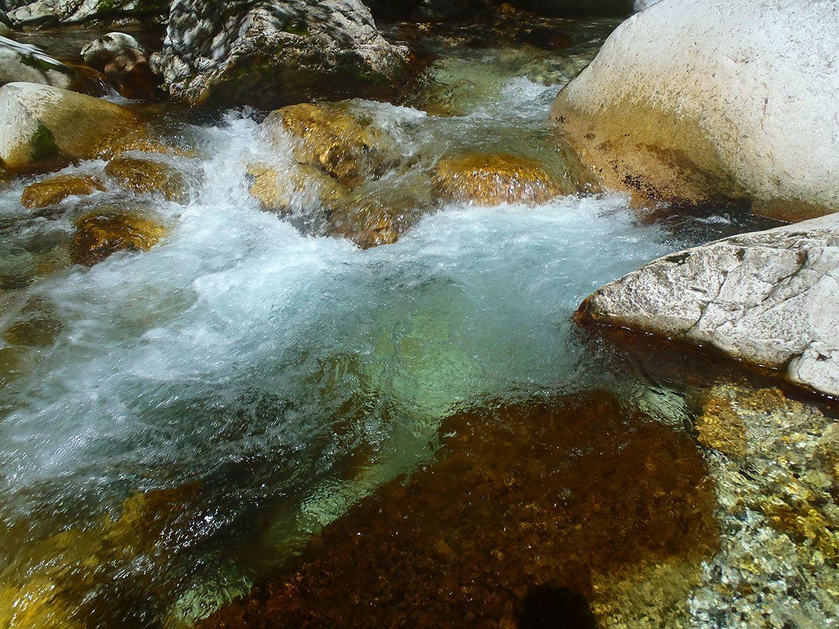 この段階でも超綺麗な水