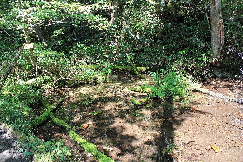 地図上にある池がここ。下山時にここまで来るとあと少しという目安になった