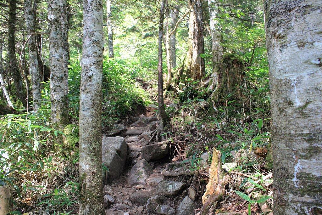 王滝ベンチから笠原沢までは沢沿いであるけど樹林帯の登山道が続く