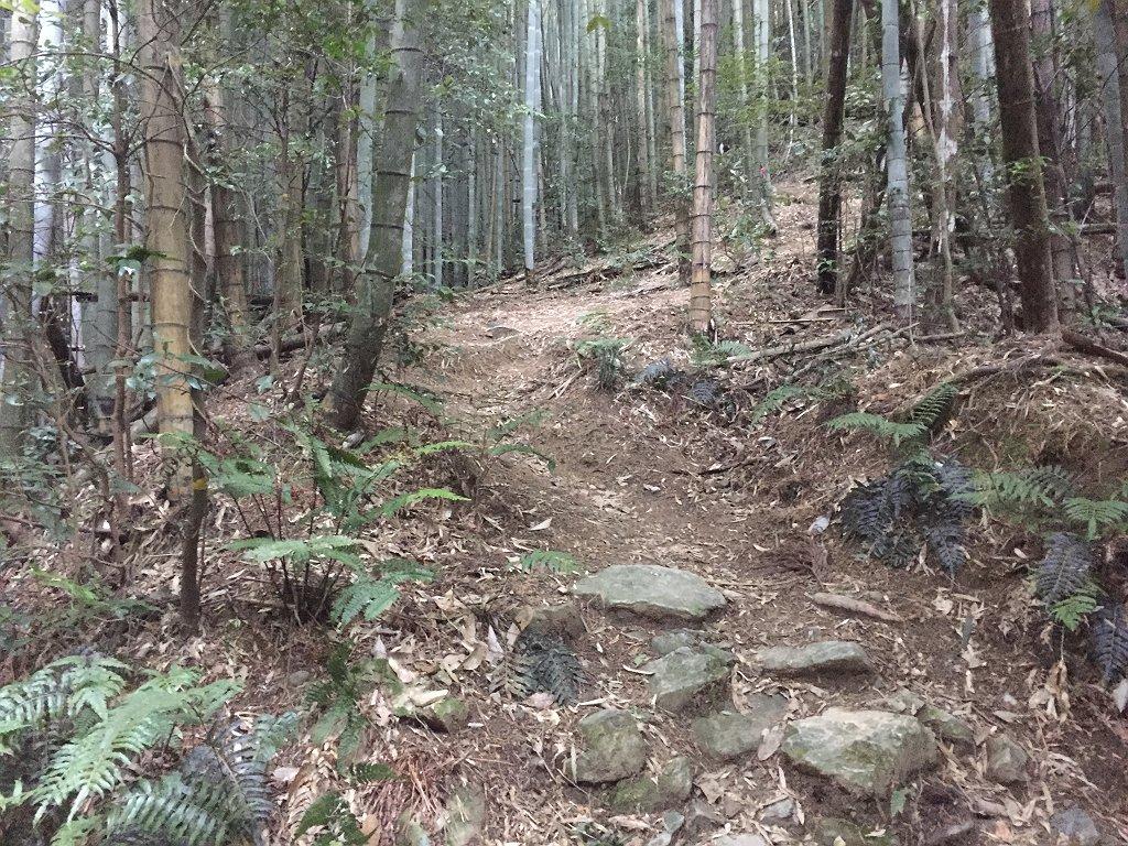 早速、竹林地帯から急登になるが道はきっちりしている。ずっと樹林帯の中を進む