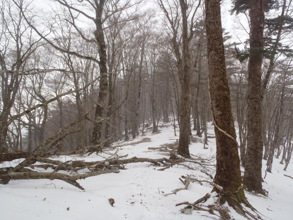 稜線は吹きさらしもあって、雪も少ない!?とりあえずP1518へ