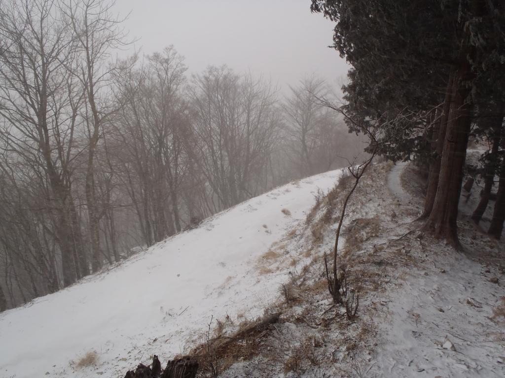 ここで川合道だとピークに登らないといけないので坪内林道を歩くことにした