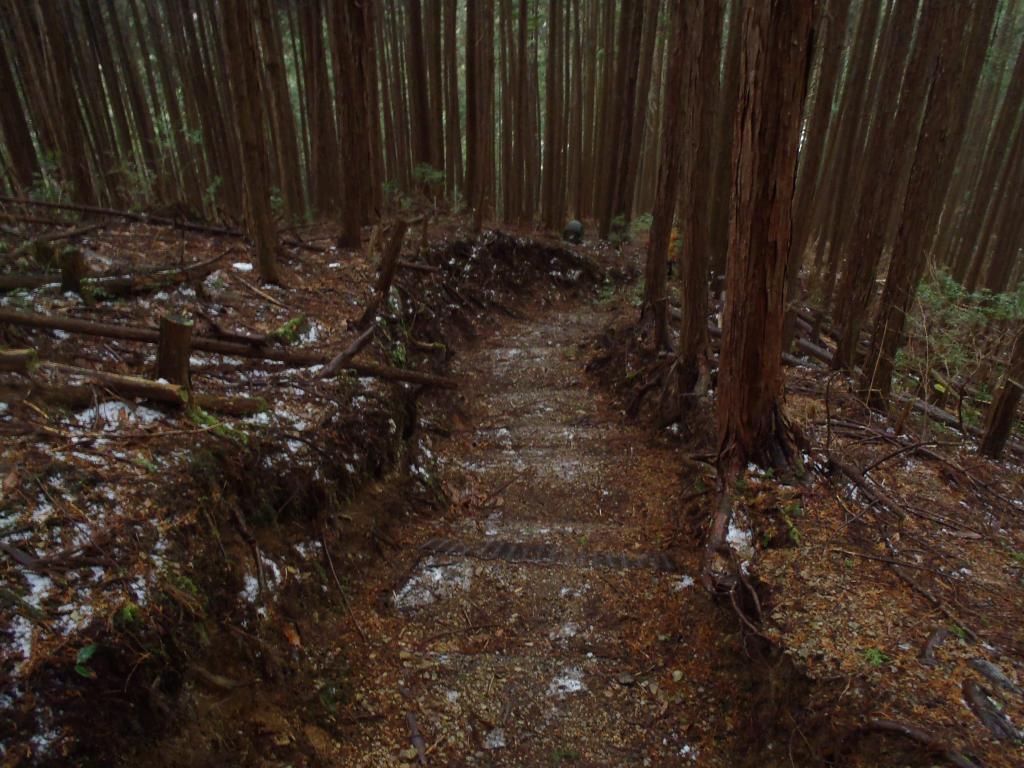 鉄塔から登山口までは短い距離だけど結構急登