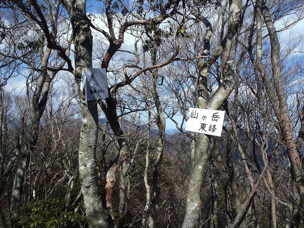 仙ヶ岳・東峰(955m)に到着