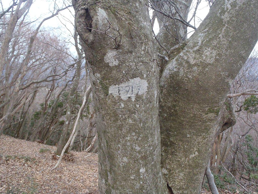 P919に到着。こっちはさらに乱暴に木に彫ってあった