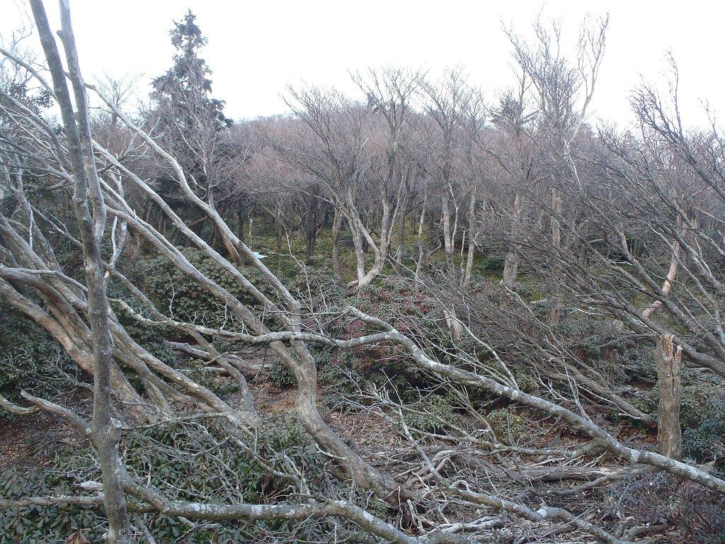 ここは荒れていたのか道が倒れた樹林ふさがっていた