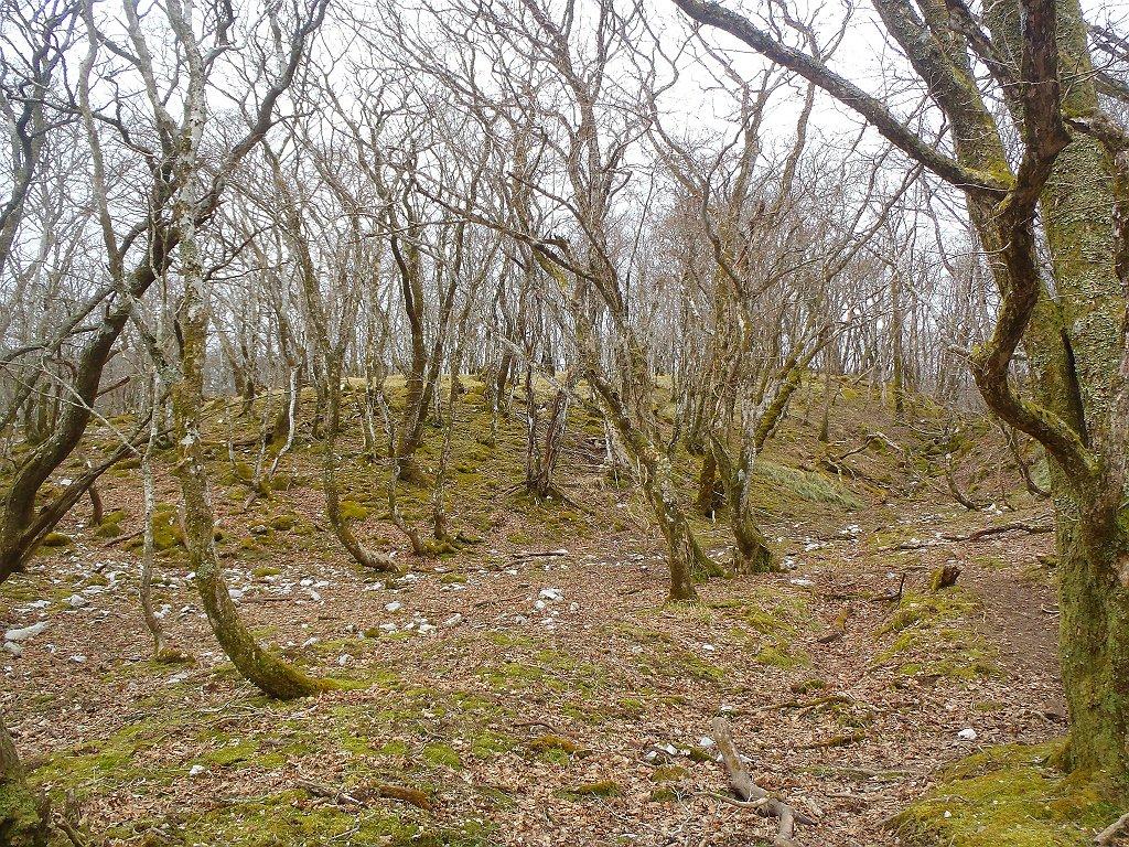 御池岳付近は苔地帯になっている