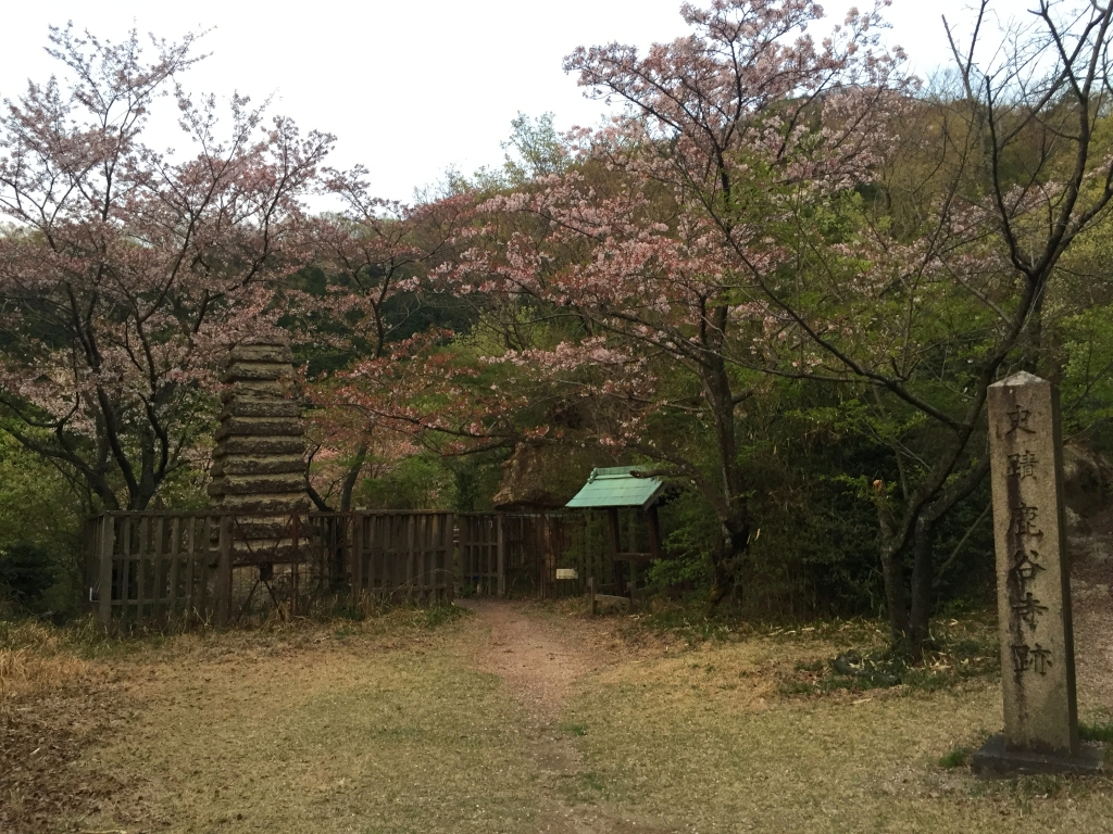 鹿谷寺跡に到着。昨日の雨で桜はかなり散ってた