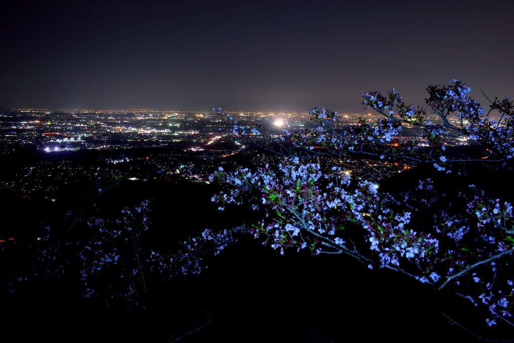 桜と夜景を撮影してみるが結構難しい