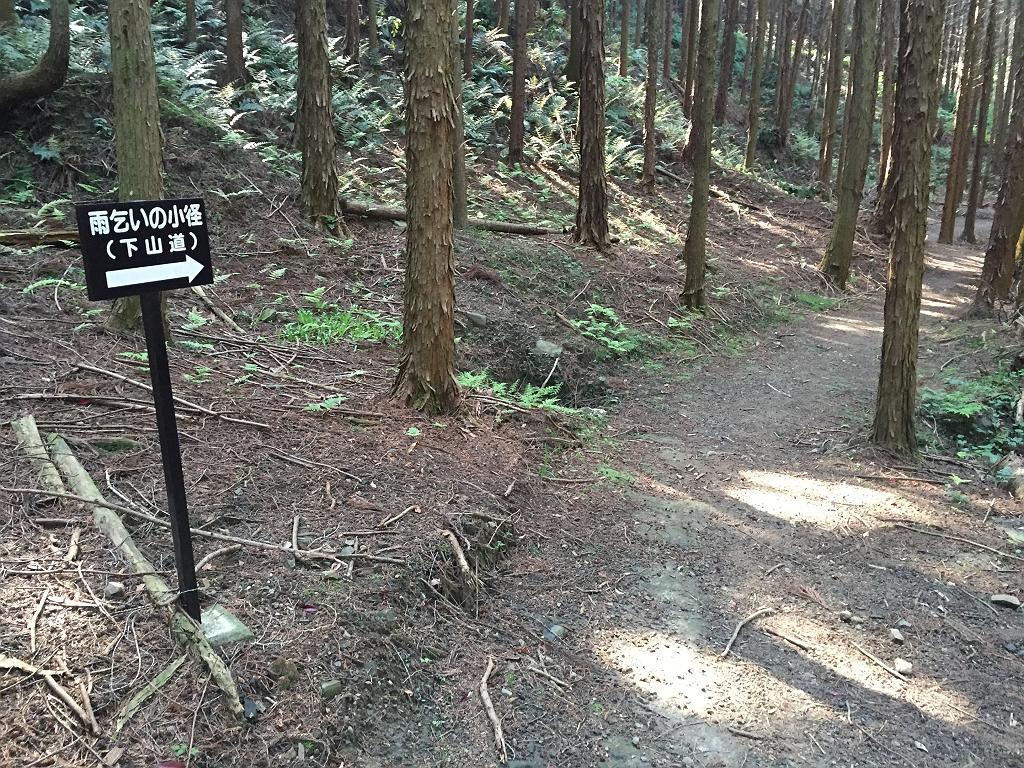 今日は暑いので雨乞いの小径(下山道)で沢筋を降りる