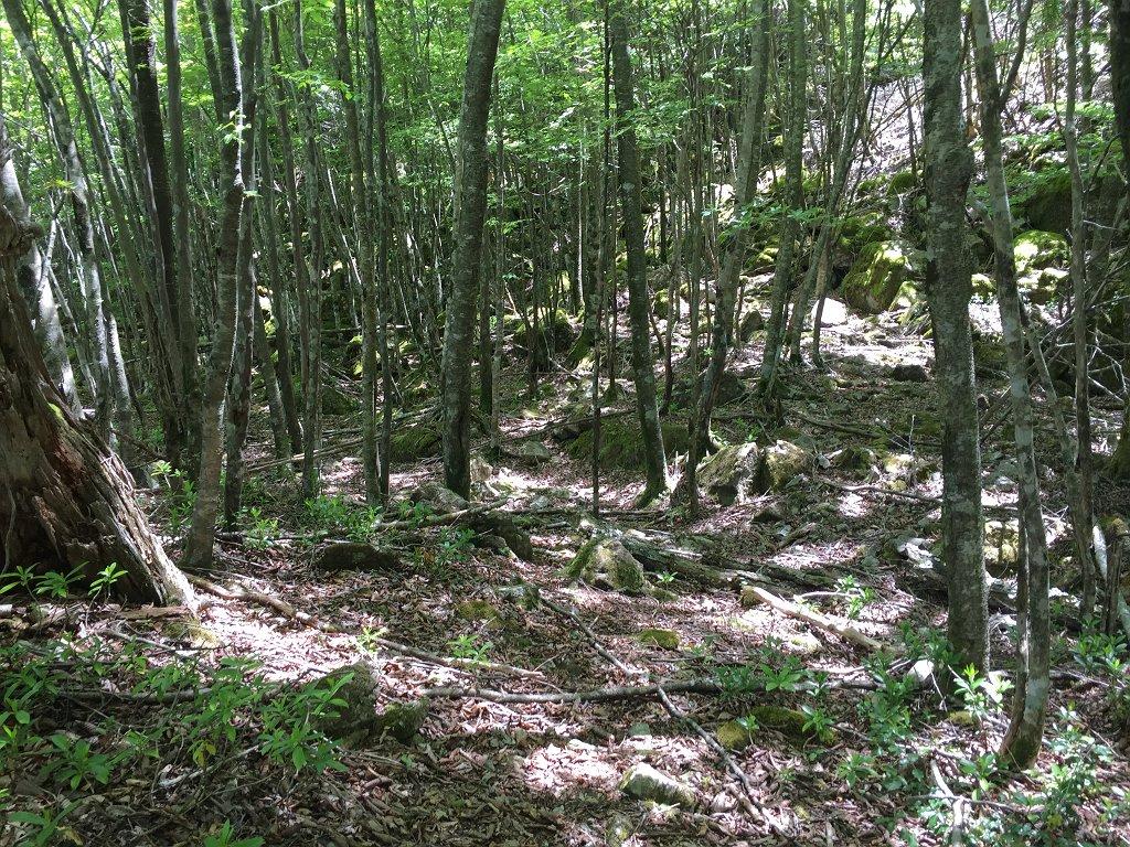 林道が終わるとまずは樹林帯を半無理やり登っていく