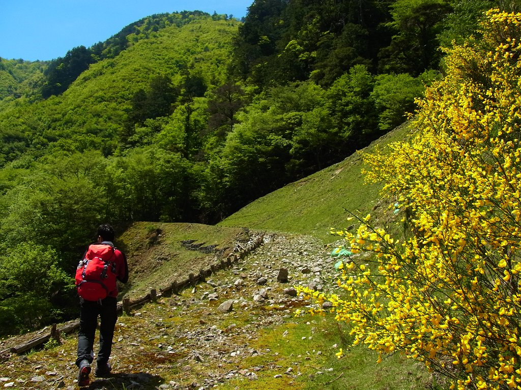 神仙平への林道