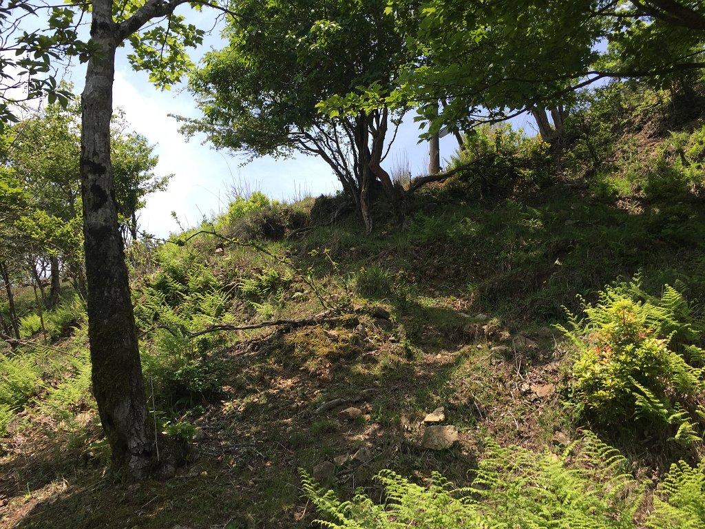 急登を15分ほど登ると開けた場所に出る