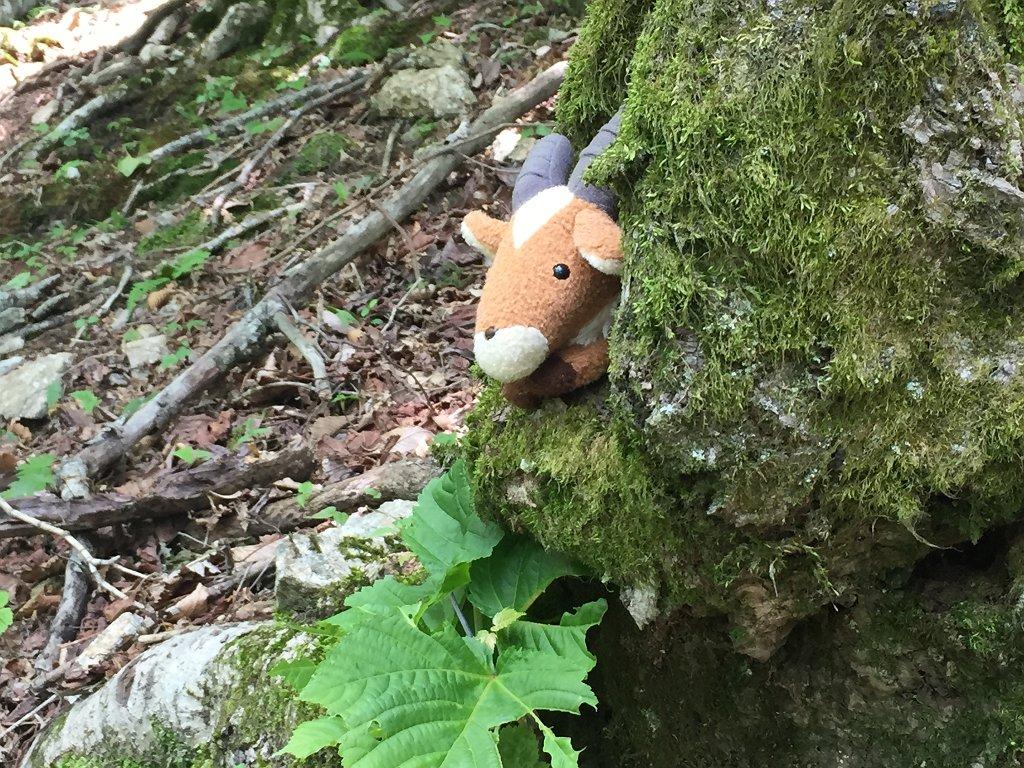 途中、嫁の持つヤックルが隠れやすい木を発見。 こうやってみるとうちの猫みたいだ