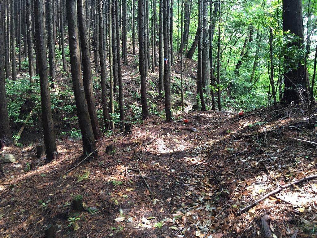 植林地帯がひたすら続く登山道になる