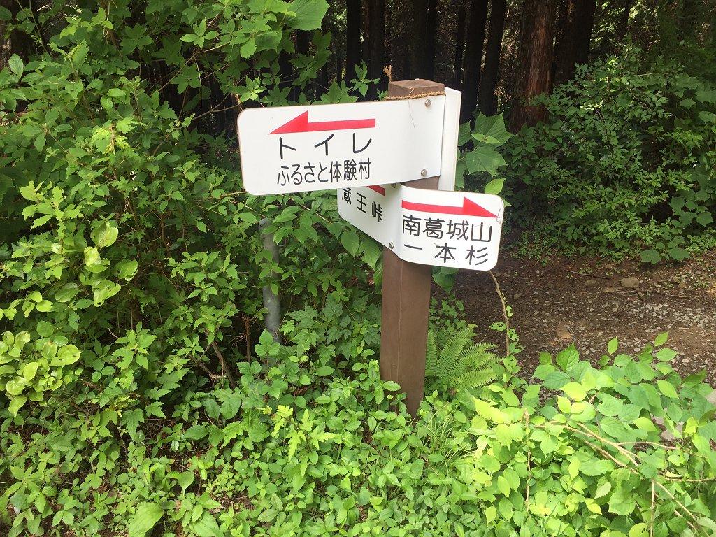 林道にはきっちりした道標があった