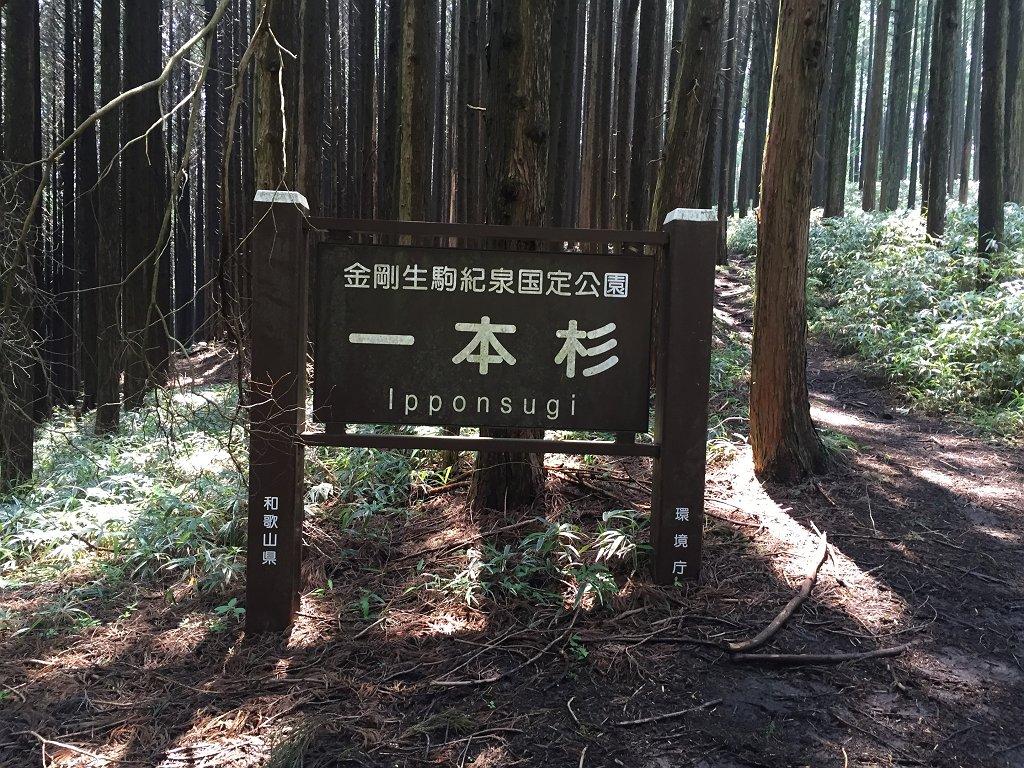 一本杉!!とでかでかとした看板。和歌山県の金剛生駒紀泉国定記念公園の看板はどこもでかでかとしている
