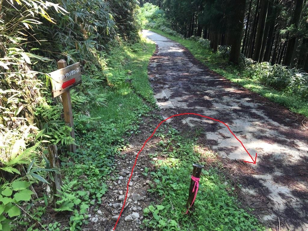一本杉から林道に降りて、これを右手に下る