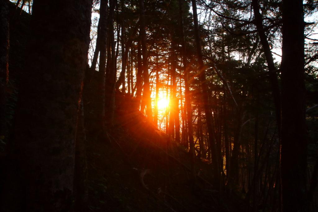 樹林の間からご来光。 赤焼けだったので、天気は下り坂
