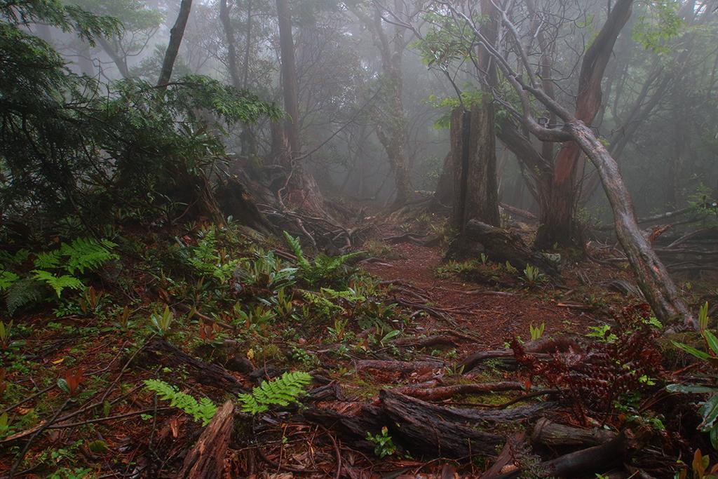 山頂から少し歩くと、あれくれた樹林のパラダイスが待っていた