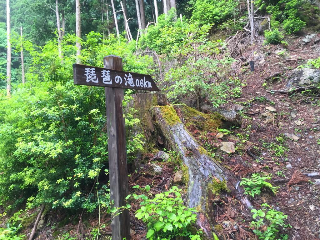 駐車場に戻る途中にあった標識が0.6kmで琵琶滝ということは、分岐から駐車場は0.7kmくらいかな!?