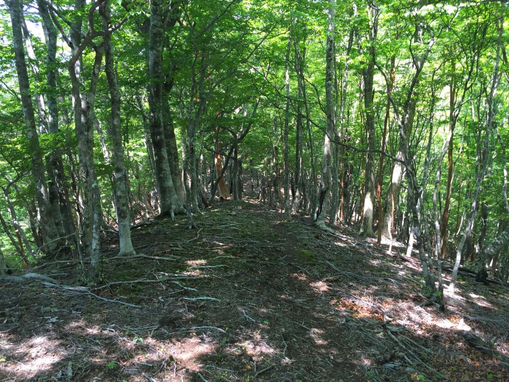 気持ちいいブナ林の道を歩く