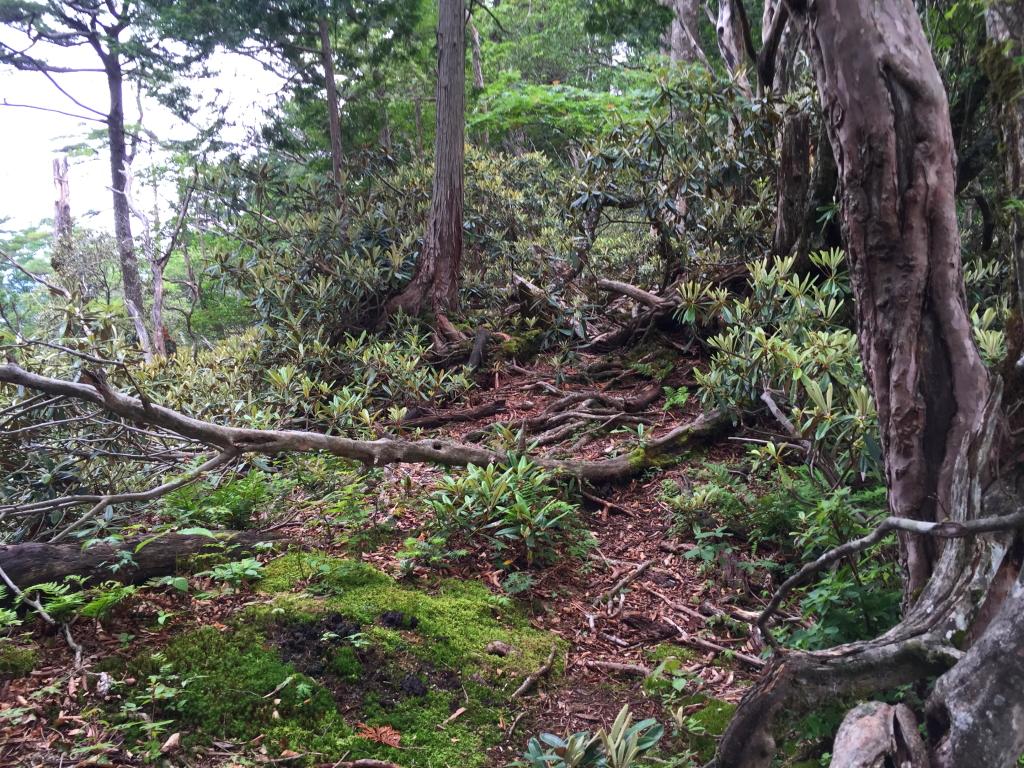 シャクナゲ地帯でまた大峰らしい神秘的な場所があった