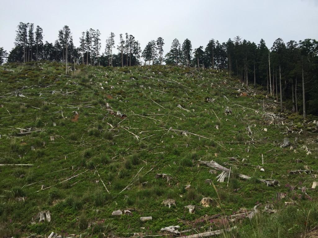反対側からみるとすごい伐採のされ方。これは自然災害ではなく完全に伐採だった