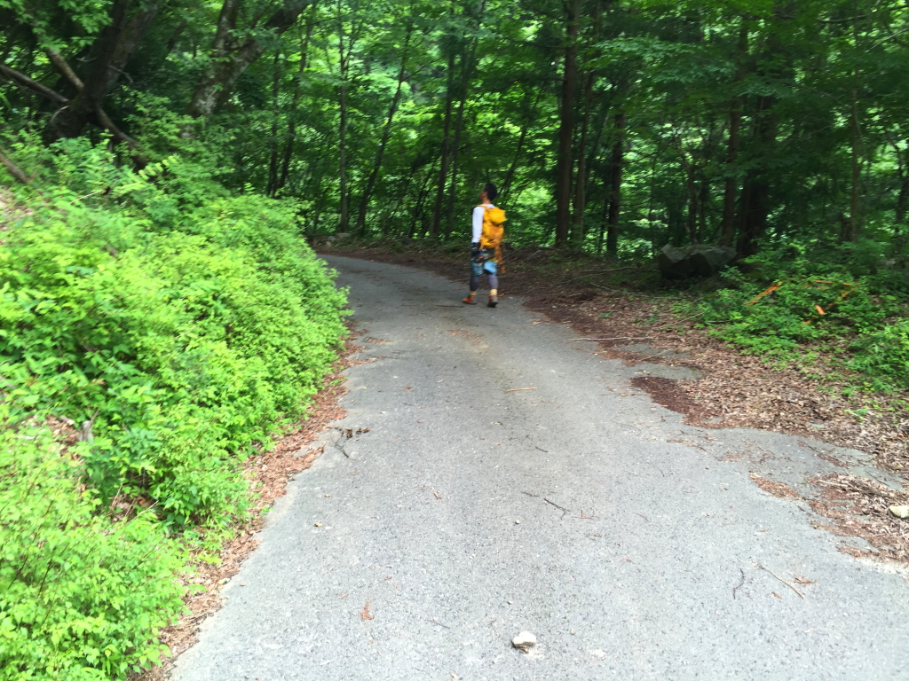 白倉林道に降りた。最後の下りはわけがわからなかった。そしてクロモジ尾は結構長い尾根だったよ~