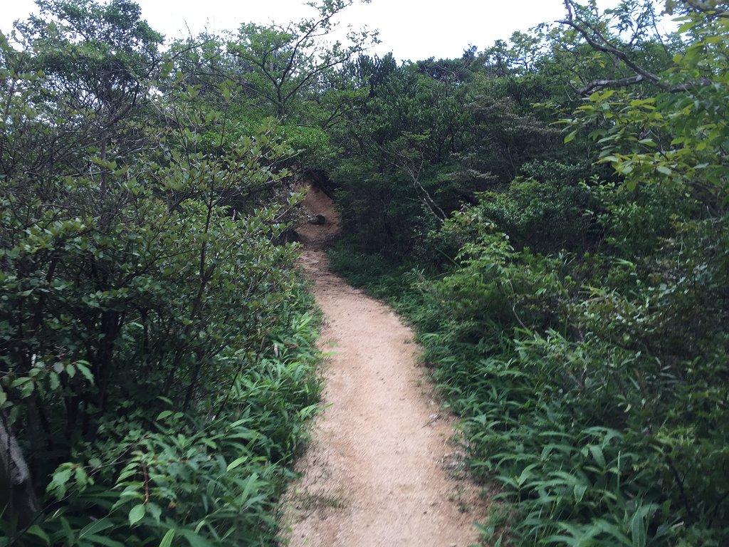 観音山までの登りとは違って気持ちの良い稜線歩きが続く