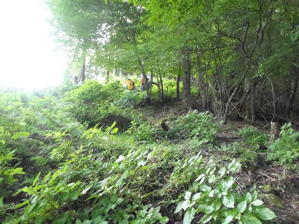 草をかきわけて登っていきます