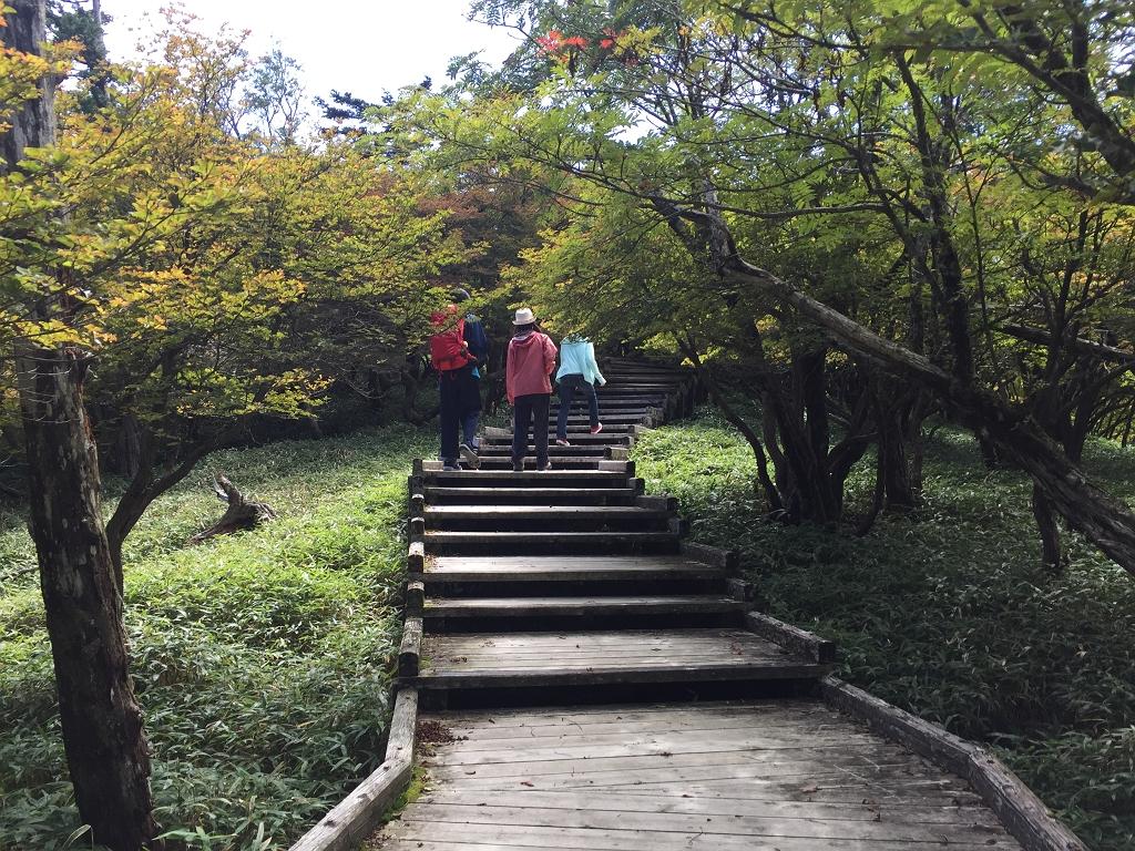 正木峠への登りの階段。樹林が多い茂ってきてる感じがする・・・