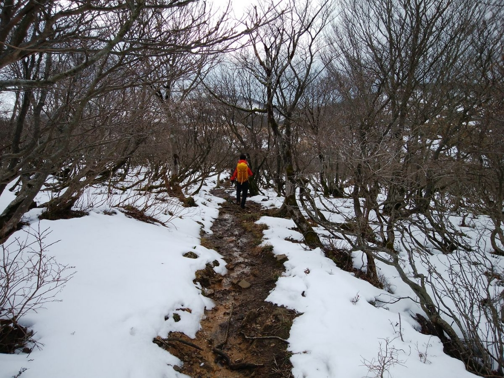 このあたりは雪があったけど、登山道はジュクジュク。尻もちなんてつきたくないと思いながら歩く