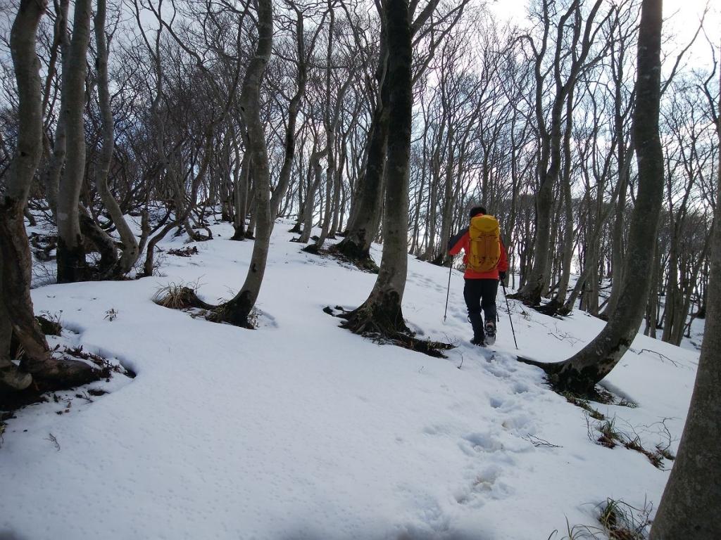 この付近から雪道が続く。雪がないとはいえ、雪山をちょい堪能してる感じ