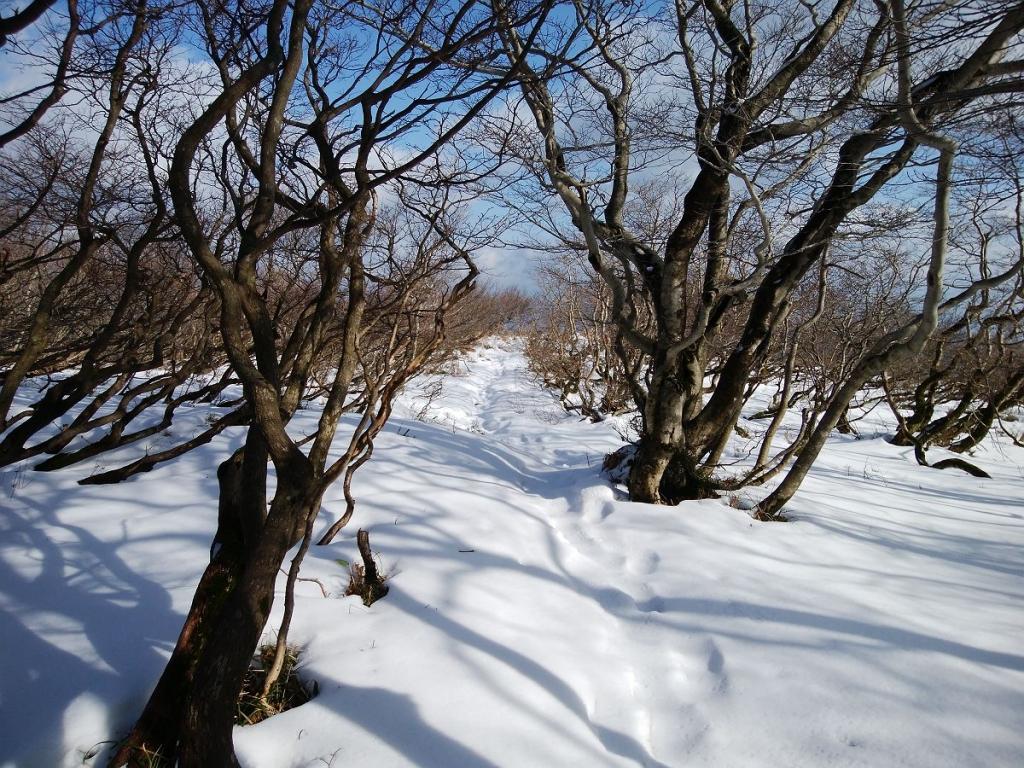 青空と雪道がいい感じ