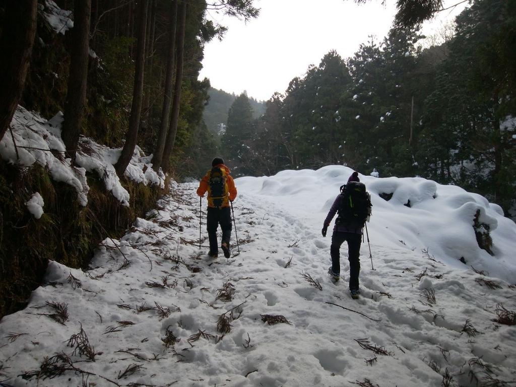 榑ヶ畑登山口まで林道を歩いていく