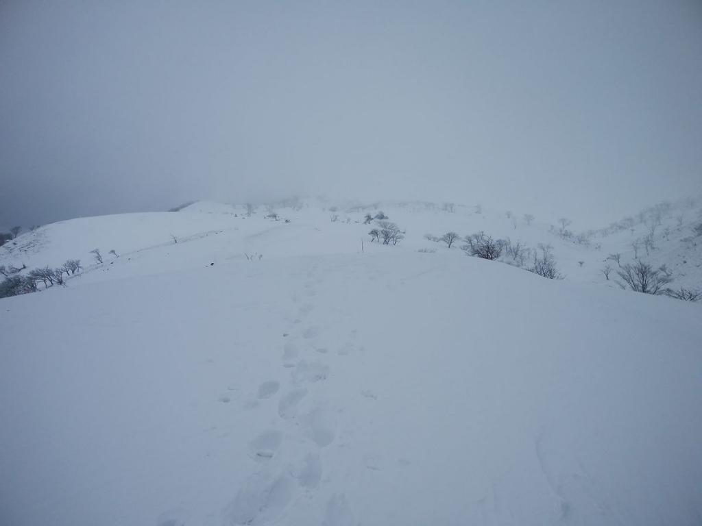 うわーやはり山頂付近はガスってる。ほぼホワイトアウト寸前