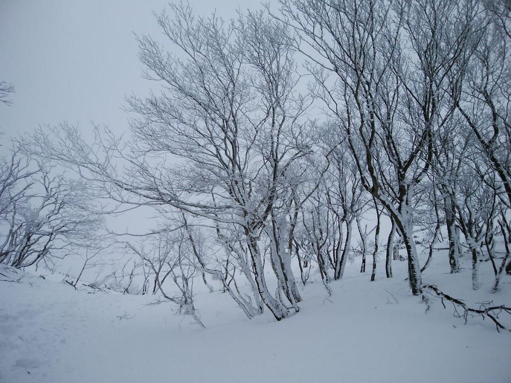 ガスってるけど、霧氷は美しい~来てよかった