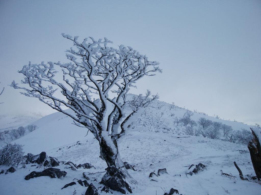 美しい霧氷