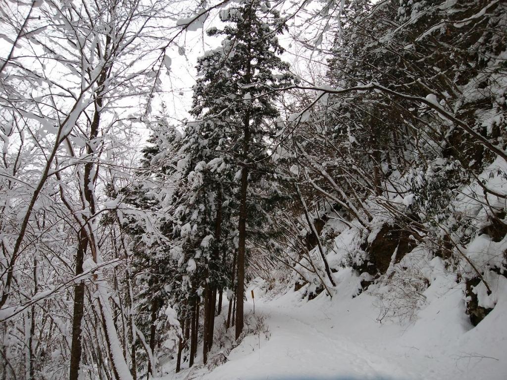 相変わらず長い林道であることは間違いなかった