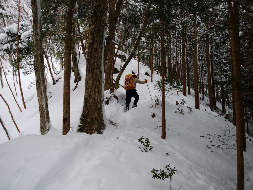 樹林帯の登り。トレースはついてたけど、ちょい先頭は歩きにくい