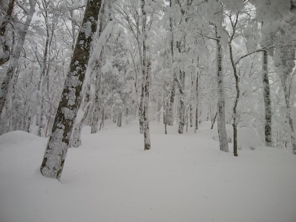 それにしても雪が深い。ここからはトレースなし