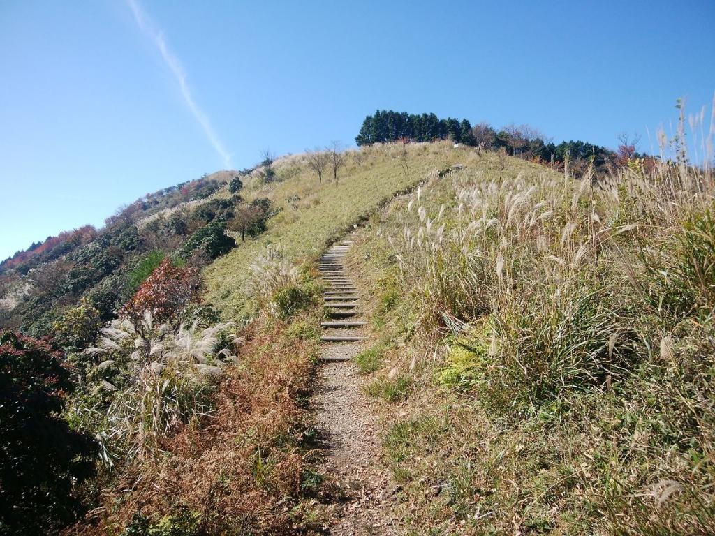 開けた場所に出た。なかなかいい感じの道。秋っぽくススキの穂がゆらぐ