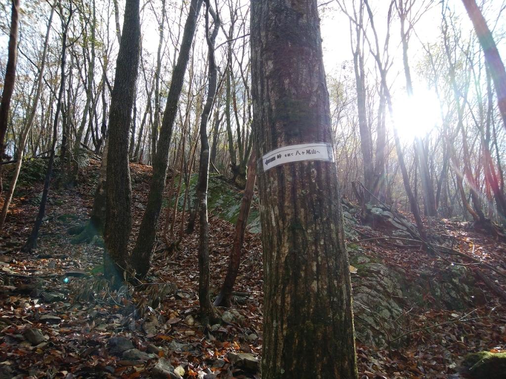 少し歩くと木にも巻き付いていた。峠を経てってそのまんまやんw