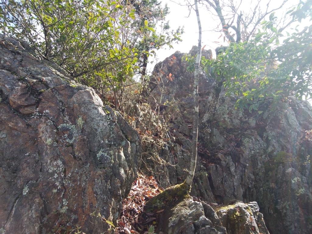 こういう岩場を巻くか登るかしていく
