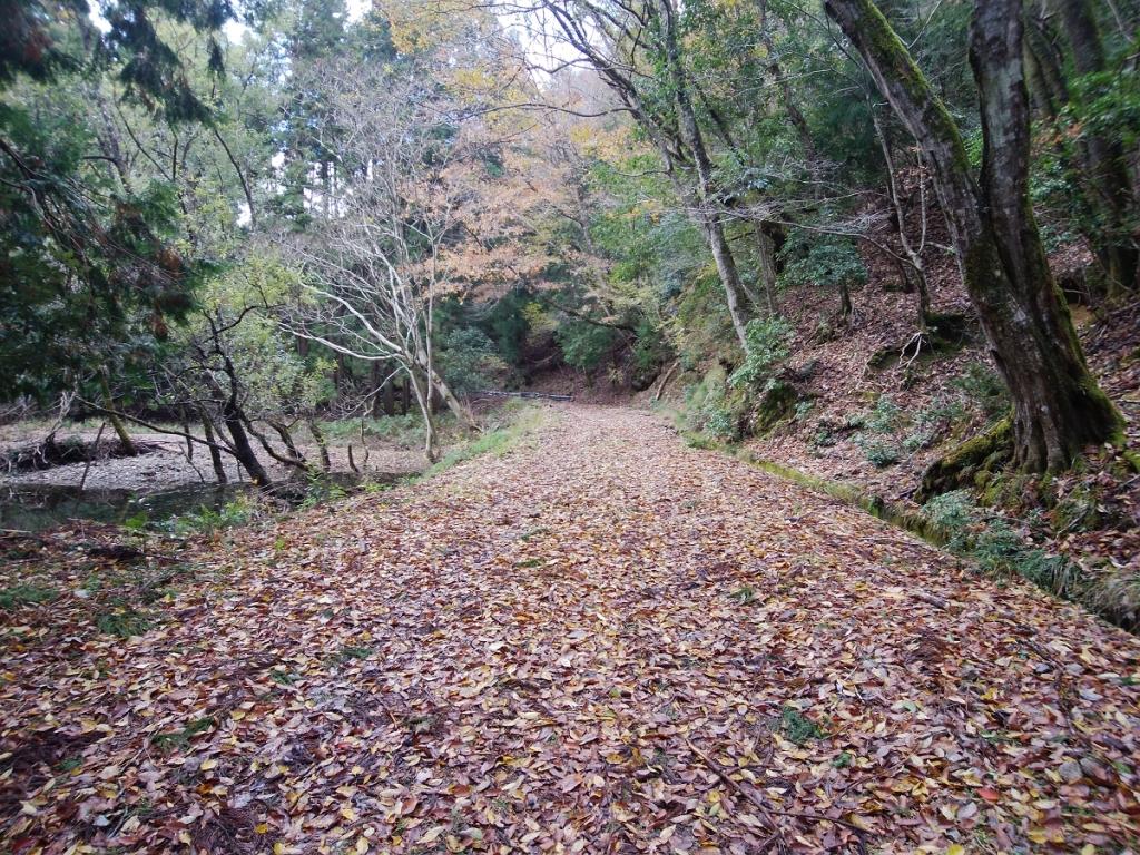 林道の終わりまで歩く。その後、また登りが始まる